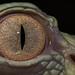 The Eye from Betty by ellen-ow