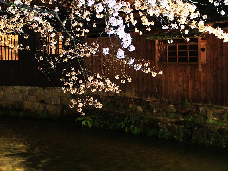 0403_祇園白川夜櫻 (40)