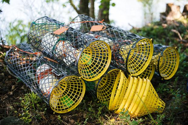 Finland_Crayfish-2450-2
