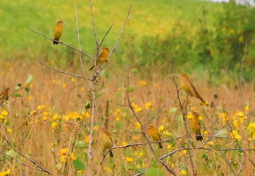 county state howard reis iowa larry hayden prairie preserve bobolinks