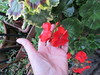 Tuesday, 6th, 2015, Flowers for my sister IMG_8366 by tomylees