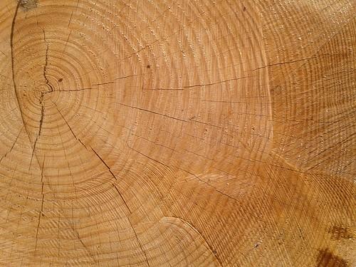wood tree texture log