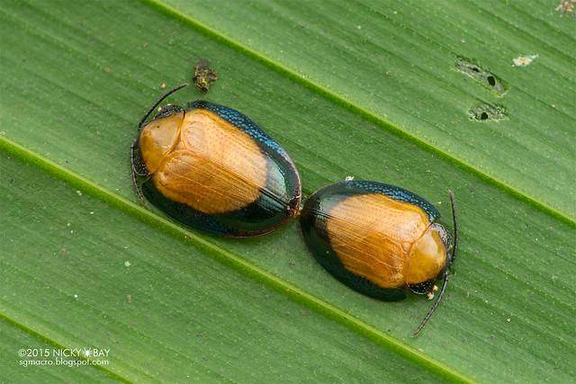 Beetle - DSC_0452