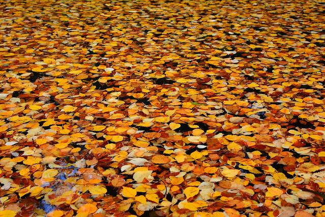 Autumn, Stanley Park, Vancouver