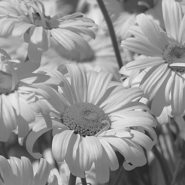 A bunch of daisies!