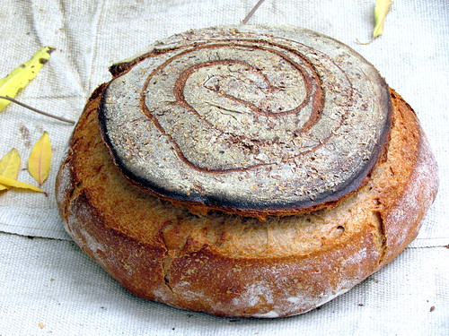 Whole Wheat Miche