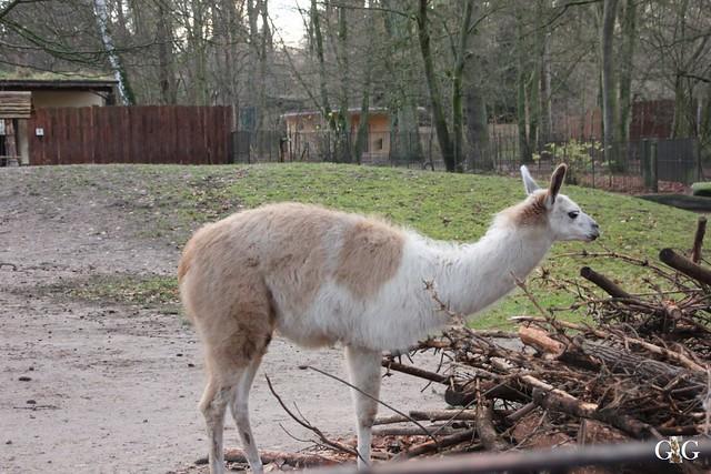Besuch Zoo Rostock 13.12.2015114