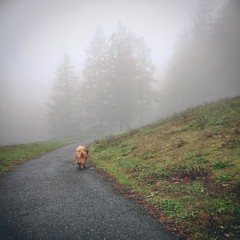 Foggy walk with this furry monster. :heart:️:dog::paw_prints: #washingtonpark #Portland