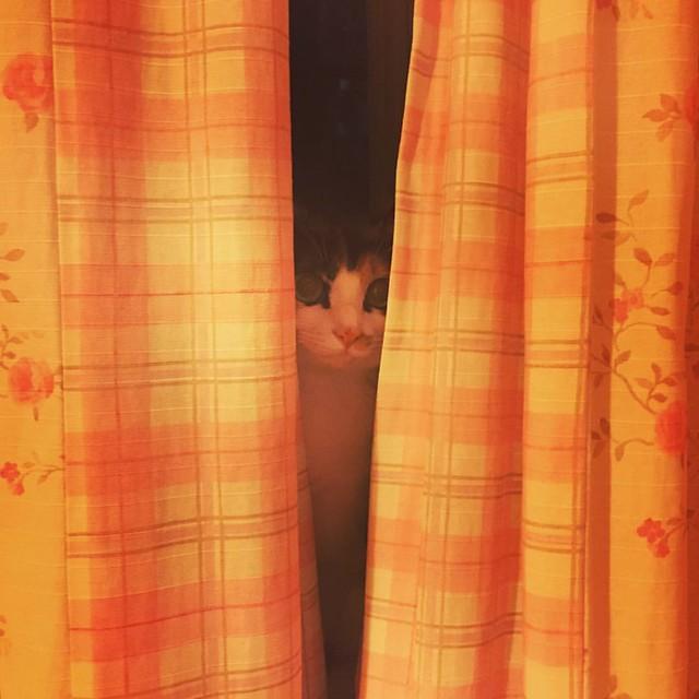 #cat #pet #eyes #shanghai #starring