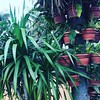 Plants everywhere! :herb::palm_tree: