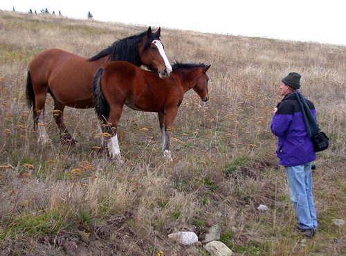 Al practices being a 'horse whisperer' in the hills above Merritt, BC
