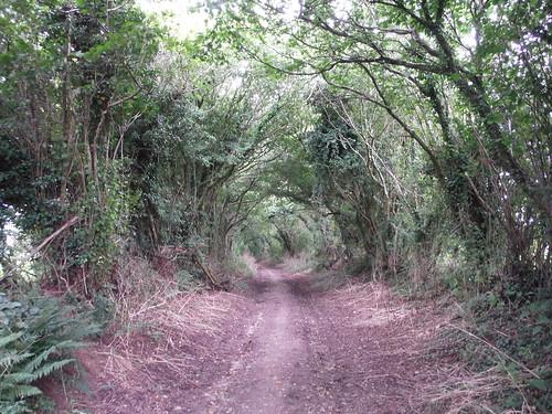 Wessex Ridgeway near Milkwell