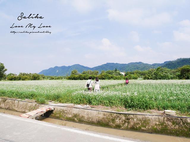 桃園大溪景點中新里韭菜花 (25)