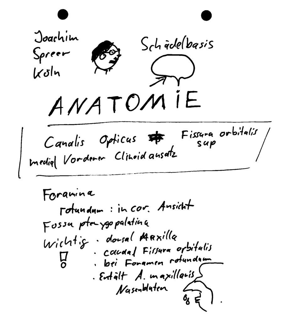 Groß Schädelbasis Anatomie Radiologie Fotos - Anatomie Von ...