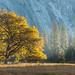 Autumn Light | Yosemite Valley by Thomas Heaton