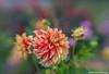 JSM_7320flowers1jsm by JayEssEmm