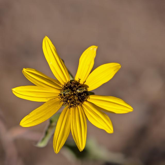 Flower IMG_2747