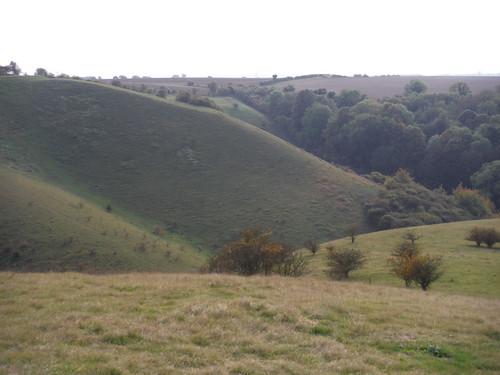 Serrated Down, Barton Hills