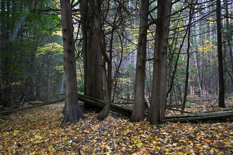 Autumn drive38