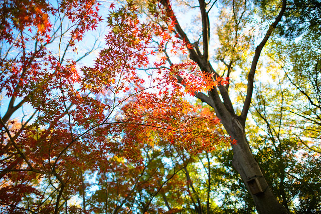 Yoyogi Autumn - Satured