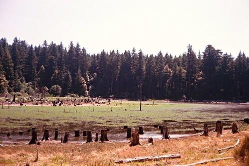 Kerrydale Ranch-9