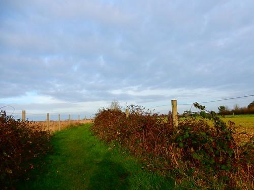 Fences and sky