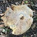 StefanSzczelkun posted a photo:Mushroom in September