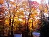 Mid October morning