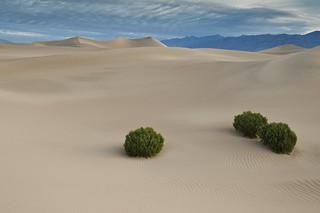Mesquite Sand Dunes, Death Valley Nationalpark, CA | Roland Krinner