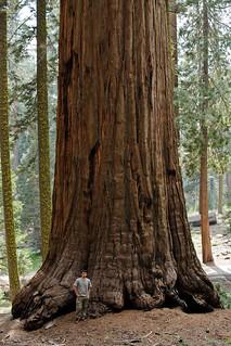 Sequoia National Park, CA | Roland Krinner