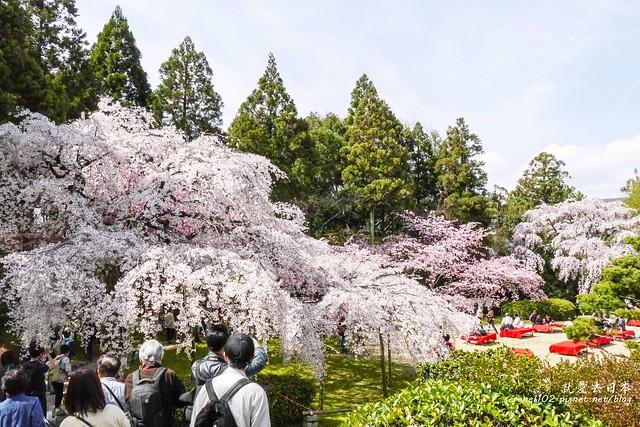 0402D8京都醍醐寺-1160296