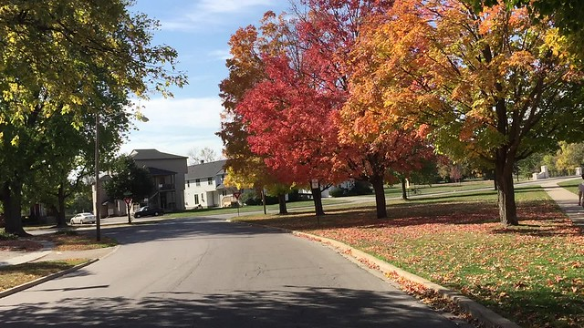 A favorite area in town to drive down during the fall