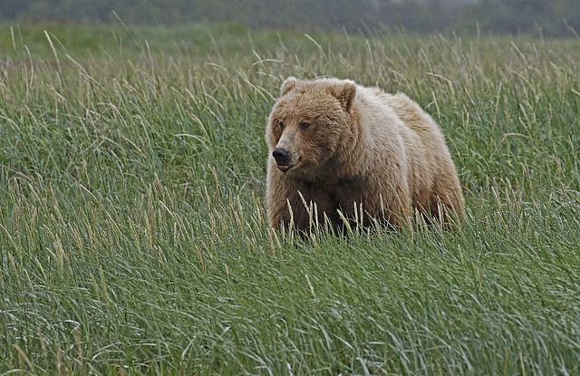 Bear In The Grass {In Explore 11/16/16}