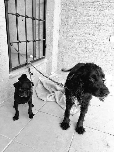 Jojo & Niña