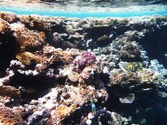 Corals close ups