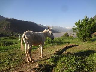 Dashtishur, Tajiquistao