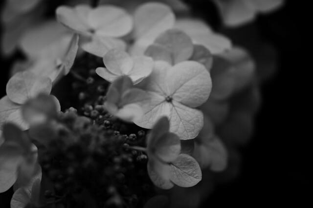 white flowers bw
