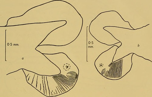 "Image from page 220 of ""Discovery reports"" (1962)"