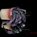 Meet harry! Crabs with trash homes, Okinawa-Japan by Okinawa Nature Photography