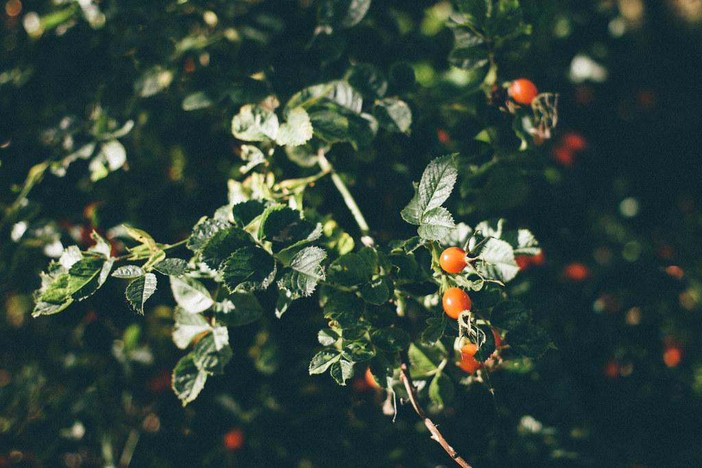 Årssummering - Bloggen i oktober