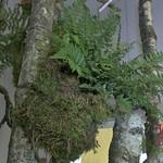 Gartenharmonie (12)