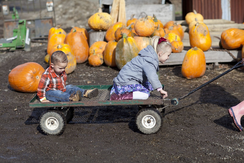PumpkinPatch2015_14