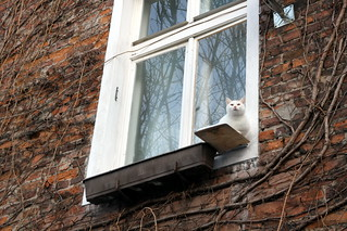 Window with a cat