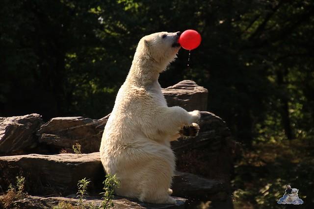 Tierpark Berlin 23.08.2015  088