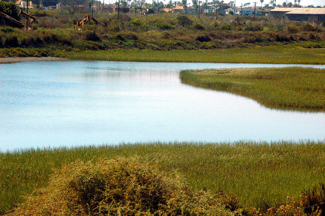 Santa Ana River Marsh