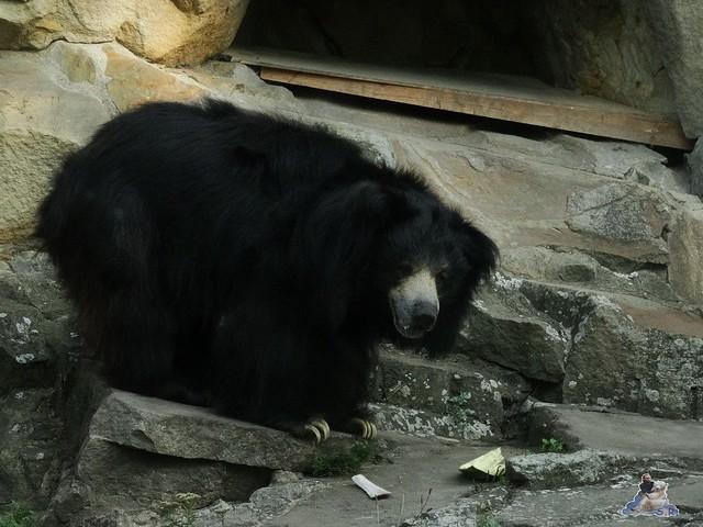 Zoo Berlin 26.08.2015  032