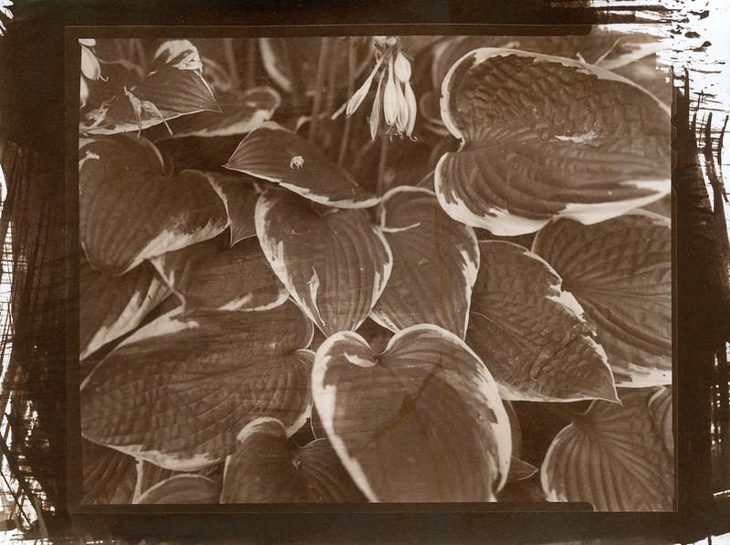 Salt-Print--002