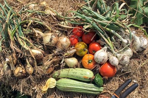 harvest IMG_2762