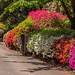 National Rhododendron Gardens in Olinda, Victroria by Paddock Without A Fence