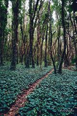 Bosque de Hojas
